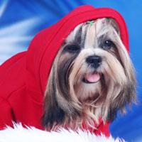 DoggyDolly-Hundebekleidung, DoggyDolly Österreich